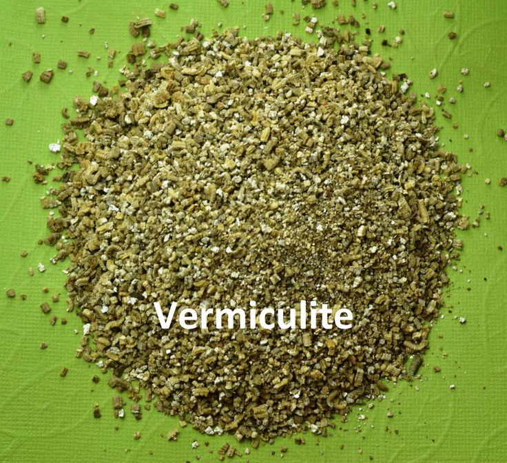 Vermiculite: it is mixed with AV potting soil to create air pockets in the medium for healthy root growth and retention of moisture.