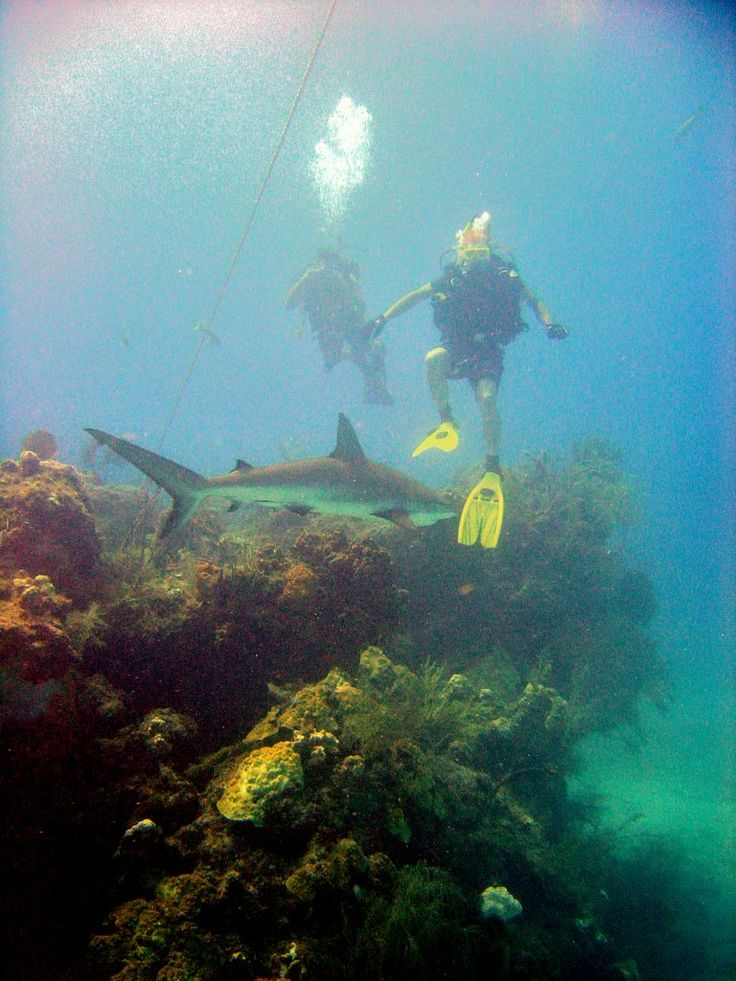Scuba diving in Bimini - carribean reef shark -  Seatech Marine Products / Daily Watermakers