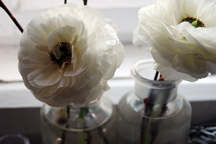 FLÓRA Floral Botanical Atelier / Ranunculus/ Winter