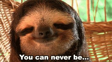 Analysts agree this sloth has reached the epitome of chill: | 17 GIFs History Will Never Forget