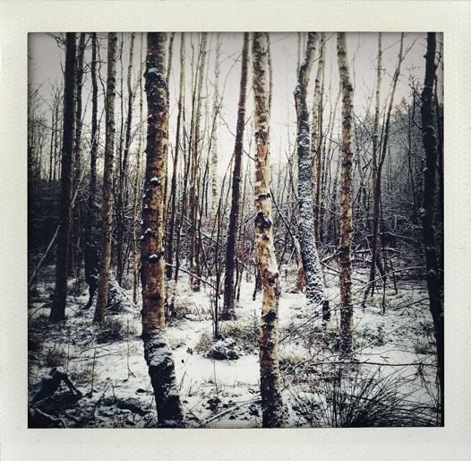 Soon to be a winter landscape (Stockholm, Sweden).