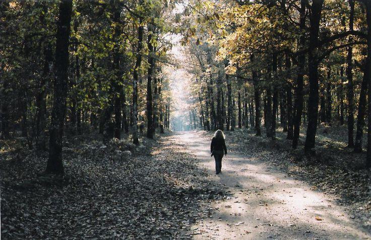Forest Folois