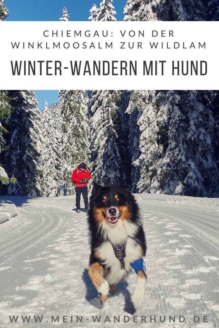Im Winter Wunderland Winklmoos Zur Wildalm Hunde Wandern Hunde Erziehen