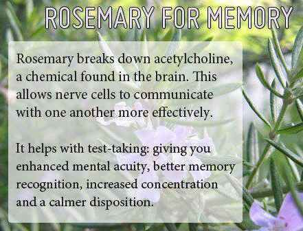 Study says sniffing rosemary improves memory by 75%