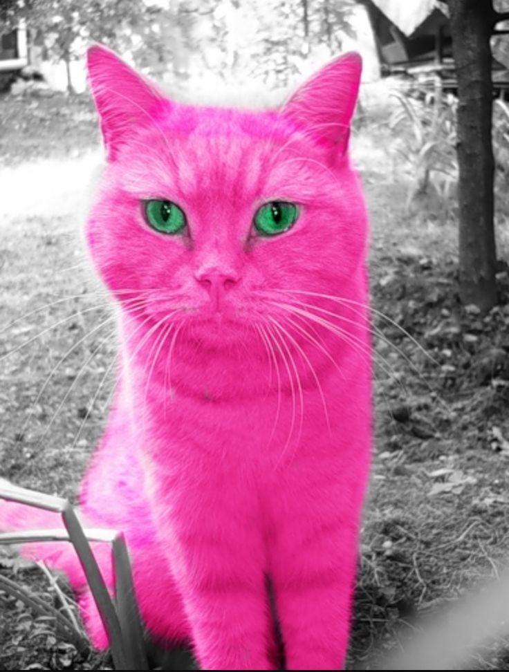называли заговорённым розовая кошка картинка следую своему совету
