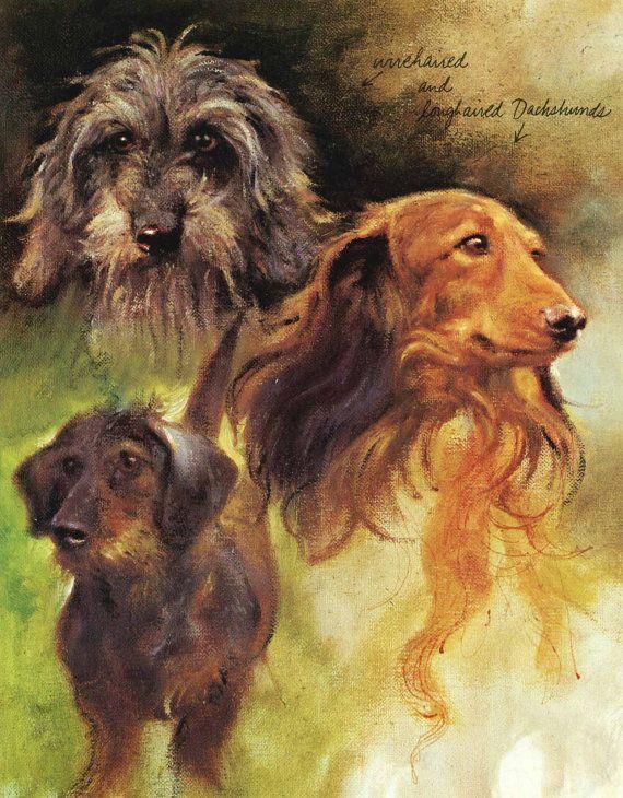 Teckel chien Wachtelhund impressions Rien Poortvliet par RoxyRani