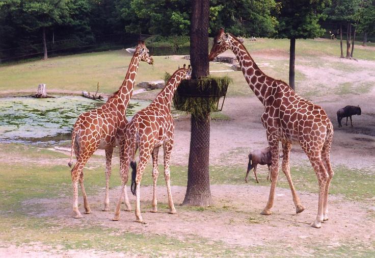 http://www.rajzazitku.cz/35-zazitky-se-zviraty/67-zakulisni-prohlidka-zoo.htm