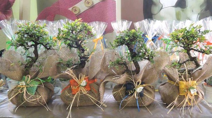 Bonsai e piante grasse tema juta Bomboniere con piante vive roma