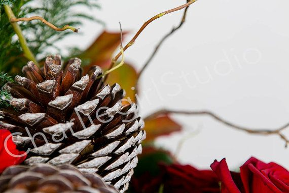 Christmas / Winter / Cone / Styled Stock by charlenemphotography