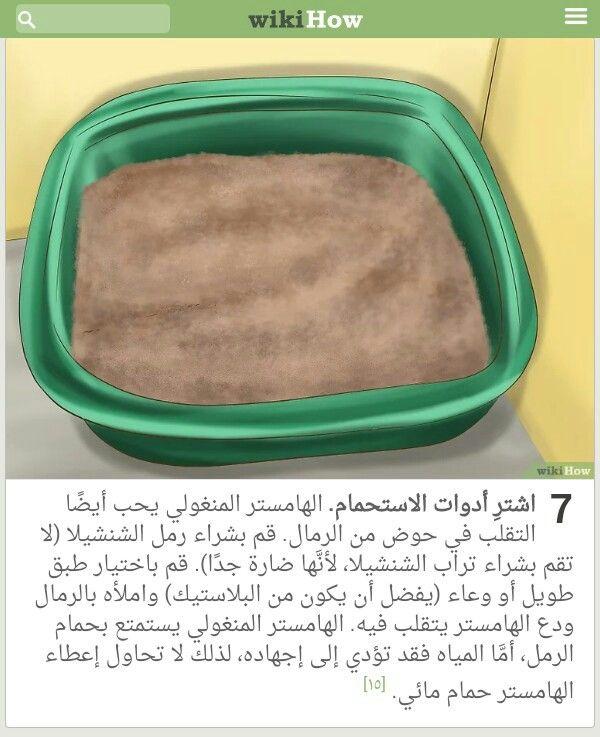 Pin By وردة فيرساي On حيوناتي الاليفة Lunch Box Sheet Pan