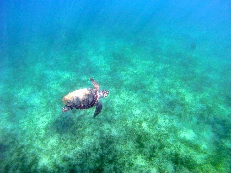 Snorkeling and Kayaking in Zakynthos 2015 http://seakayakingzakynthos.com/