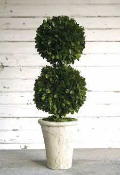 "Preserved Boxwood Topiary 20"" Double Ball"
