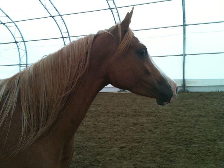 Best Horse Behavior Images On   Horse Behavior Horse