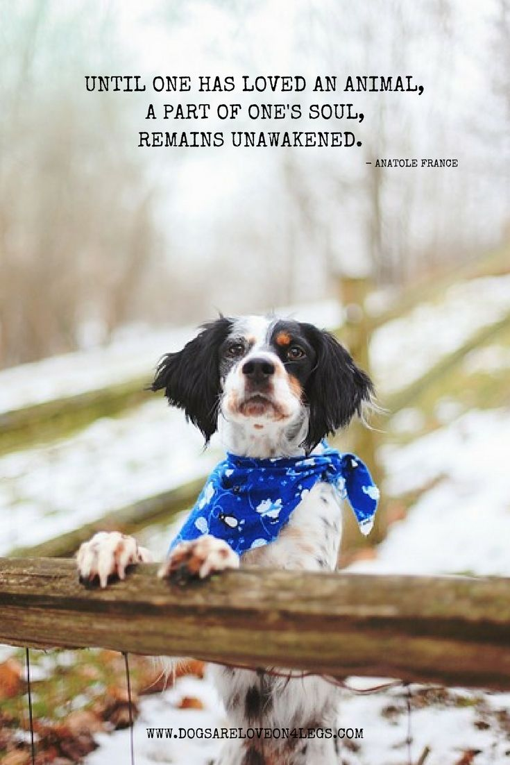 Until one has loved an animal, a part of one's soul remains unawakened. Dog, Quotes