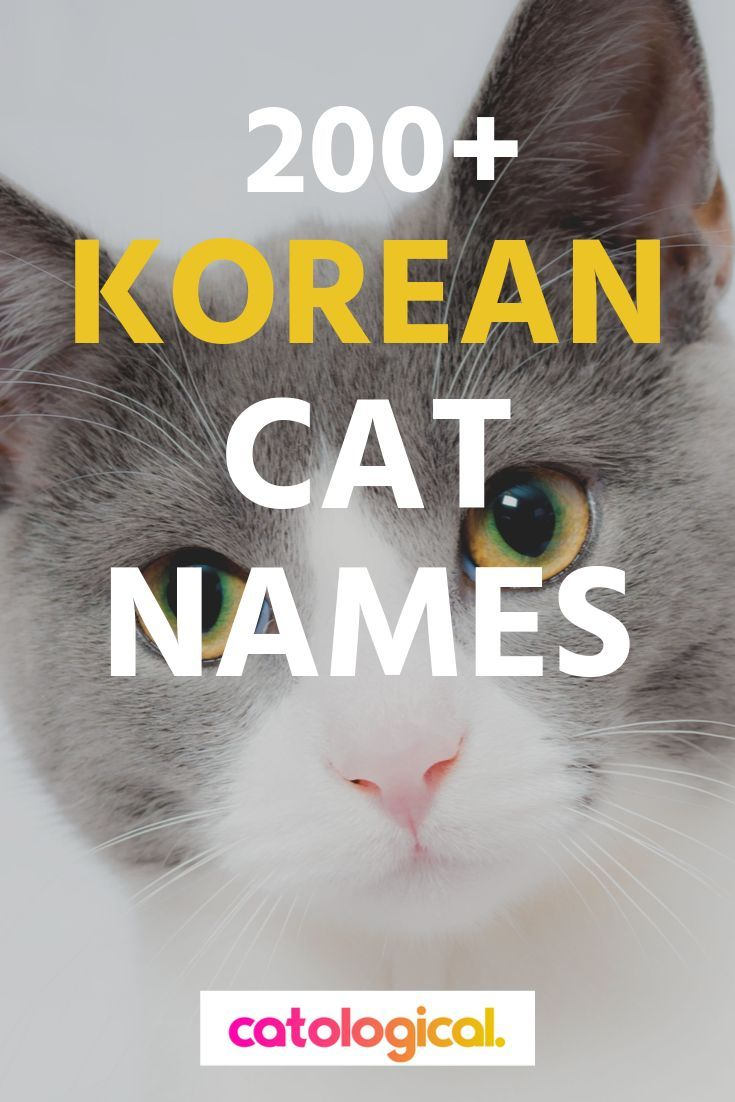 Clearly Cats Have A Special Place In Korean Cultural History And A Great Way To Honor This Heritage Is By Givi Cat Names Funny Cat Names Names For Black Cats