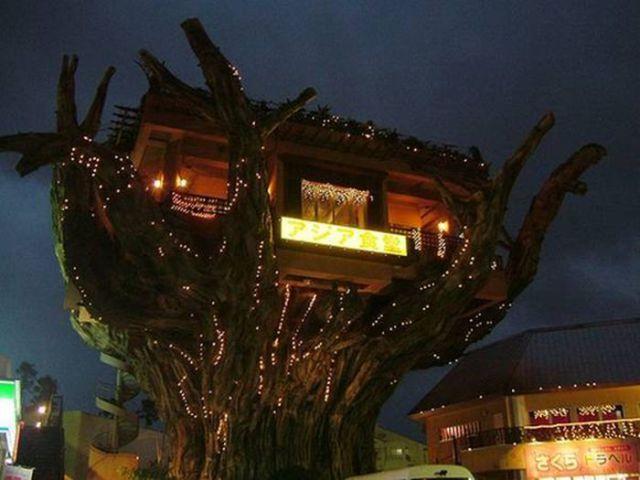 Ağaç ev restoran, Okinawa,