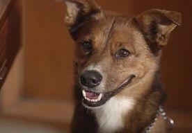 26-May-2015 13:02 - DE HOND, TROUW TOT NA DE DOOD: HOUDT U HET NOG DROOG?. Een hond de trouwste vriend van de mens? Jazeker, en dit pakkende reclamefilmpje zet die onmiskenbare band nog eens extra in de verf. Tot na de…...