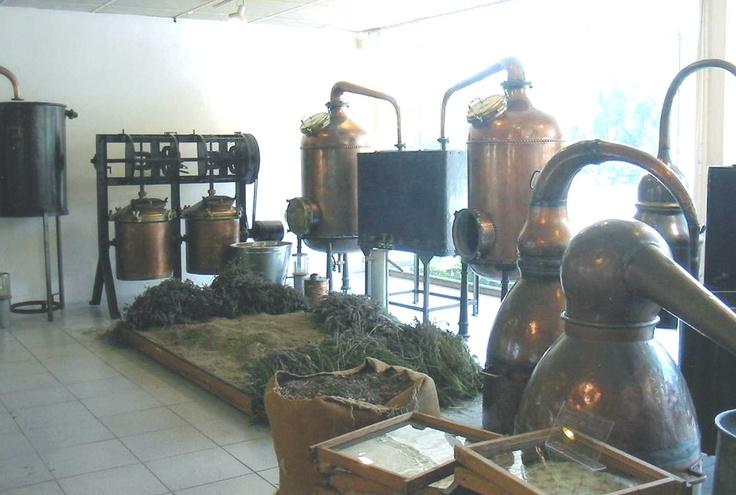 fragonard perfume factory grasse france parfum. Black Bedroom Furniture Sets. Home Design Ideas