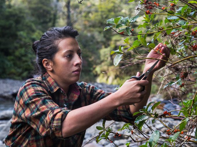 Back from some of New York's best restaurants, chef Monique Fiso is foraging and experimenting - and helping people see Māori cuisine with fresh eyes.