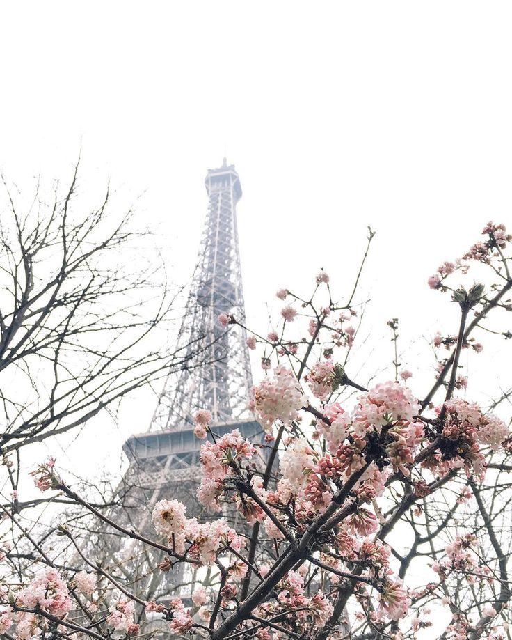Pink blossom and the Eiffel Tower, Paris