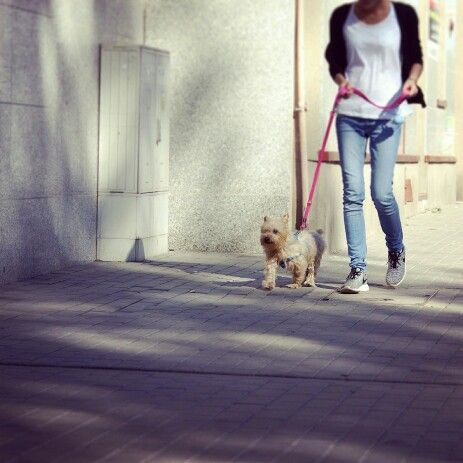 Walking my human, lunch break!