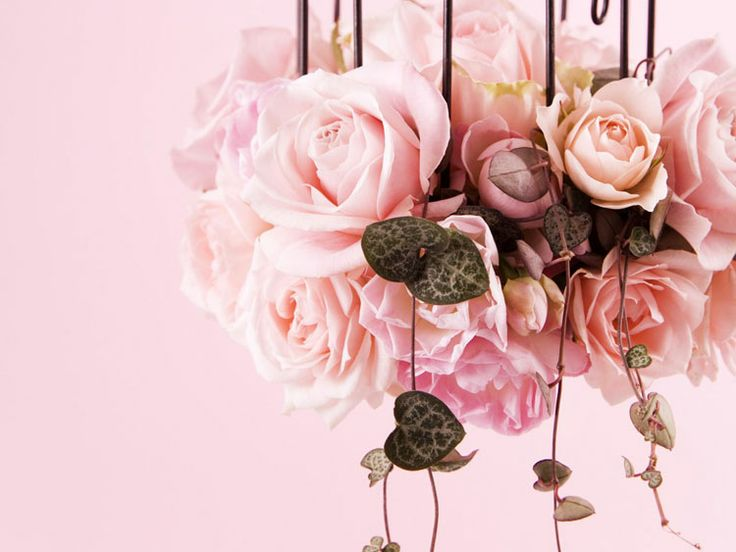 66 best Цветы images on Pinterest | Rose flowers, Story story and ...