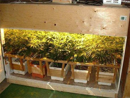 Best way to grow marijuana indoors for Interiores para marihuana