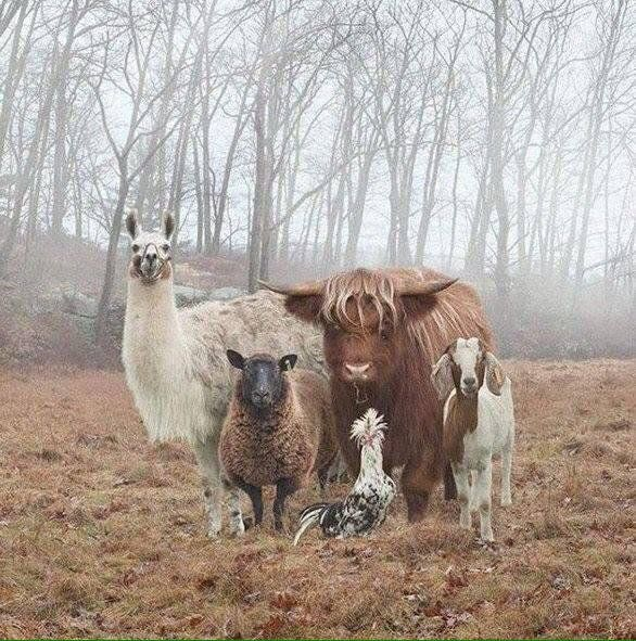 A rather unusual family photograph ... #quirkyanimals