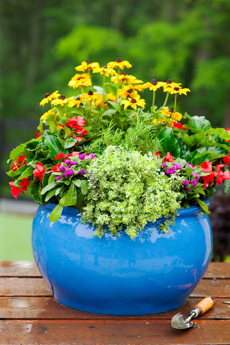 best outside and plants images on pinterest diy landscaping