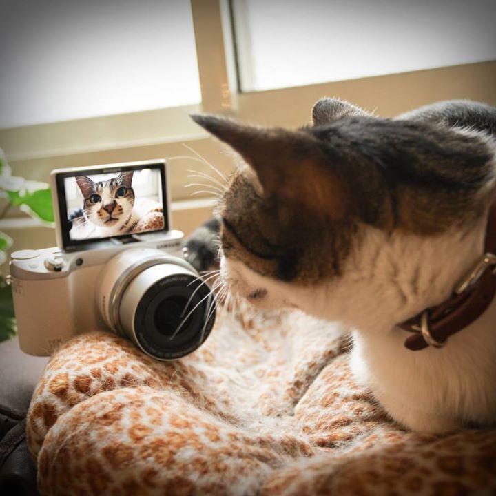 Ook katten maken selfies...