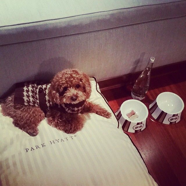 Farm chicken, roasted bone marrow, twilight strolls to the lake and our V.I.D. (Very Important Dog program) at @parkhyattchi makes our guests luxury list. #MYLUXLIST | Park Hyatt