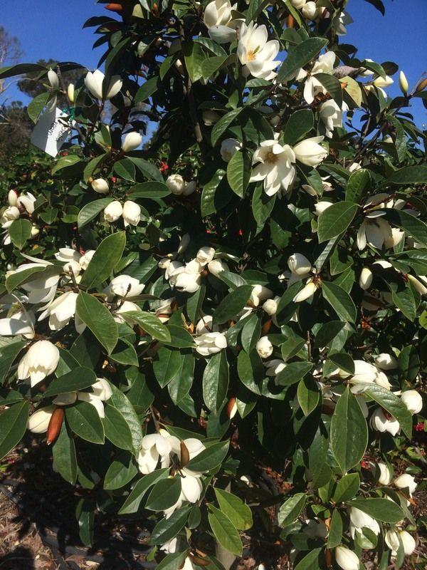 Image Result For Fairy Garden Tree