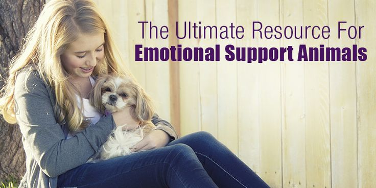 25 Best Ideas About Emotional Support Animal On Pinterest