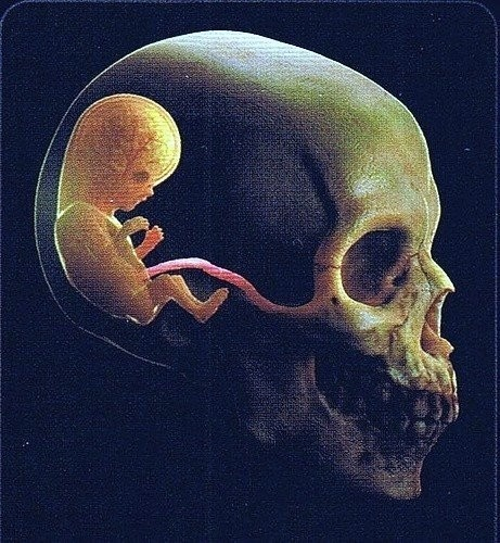 Conception.