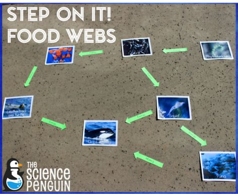 Send your students on a trip through an ocean food web!