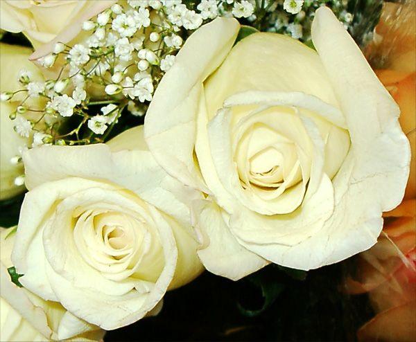 Esküvőszervezés - Virágok, dekorációk, székszoknya