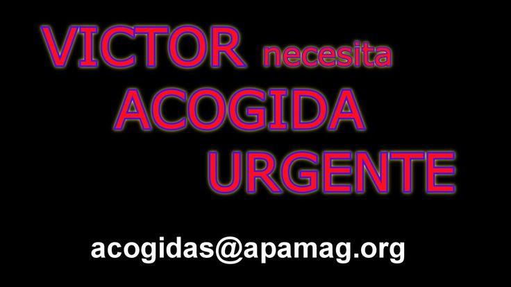 ACOGIDA URGENTE  para VICTOR.  APAMaG
