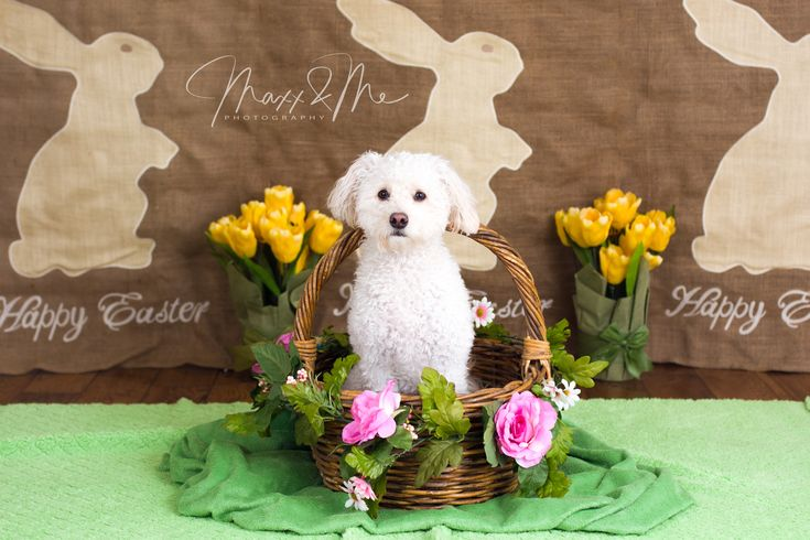 When you set up an Easter basket to photograph a baby and your little white dog jumps in the shot!