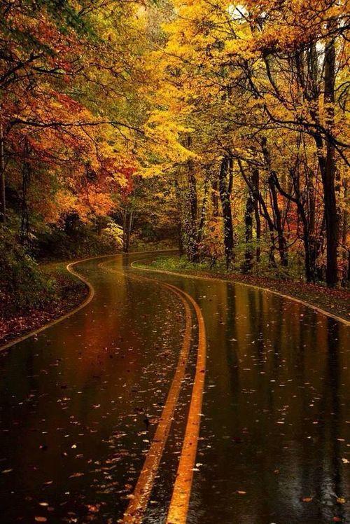 Yellow Leaf Road in the Rain ♡, North Carolina USA