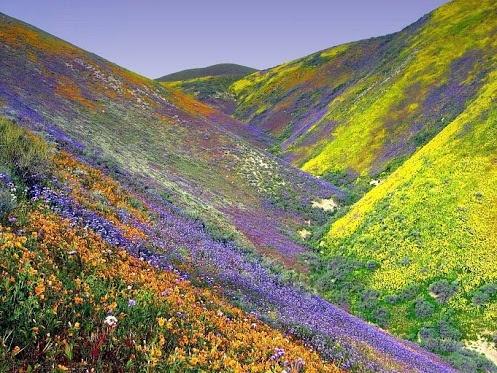 Valley Of Flowers Chamoli, Uttaranchal, India!!!