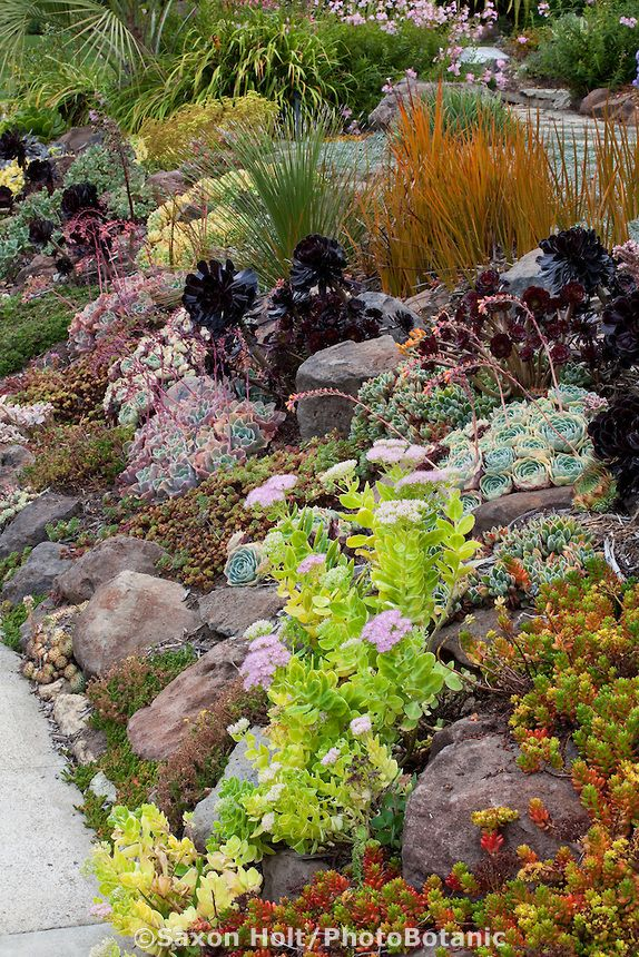 Sloped front yard garden by sidewalk with drought tolerant succulent tapestry lawn substitute