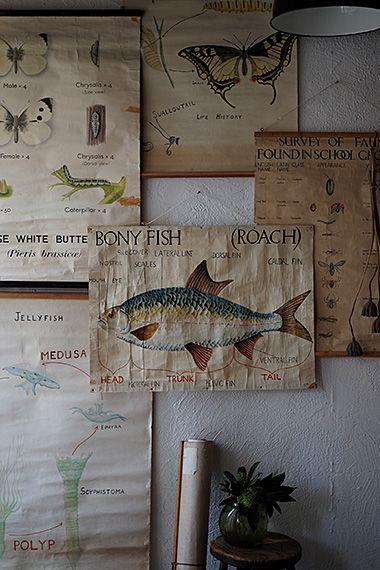 自然科学ポスター-vintage biology poster 手描きに着目。印刷された大きな対象は生物学授業での教壇で使われたポスターと考えますが、「生物の成長」と銘打つ各課題に沿り生徒さんが提出した課題?かと。中には文字こそフリーハンド、ややユニークな字体で記された、これも個性と思う仕上がり含め、美しい色彩から喜々として生物の不思議は伝播している様。