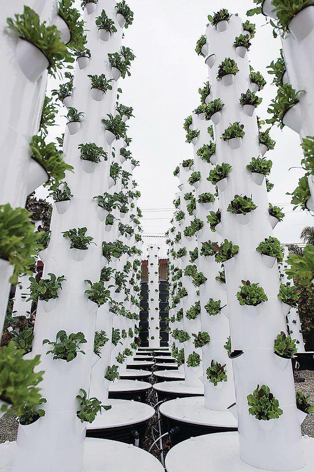 Montecito ~ Urban Farm Tower Gardens
