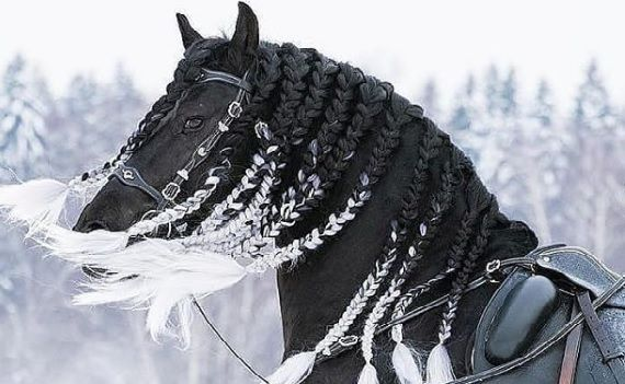 Pin On Horse Hairstyles