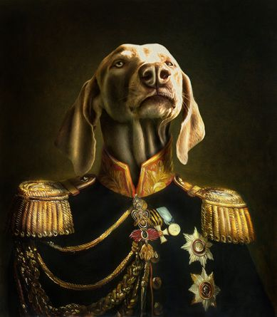 les 5178 meilleures images du tableau sur pinterest portraits d 39 animaux petits chiens. Black Bedroom Furniture Sets. Home Design Ideas