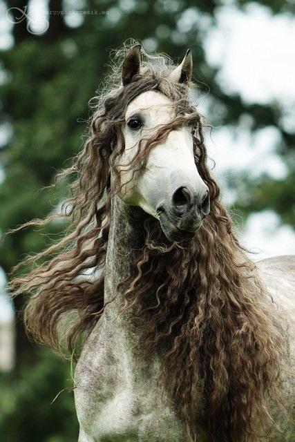 17 best images about american bashkir curly horses bashkir curlies