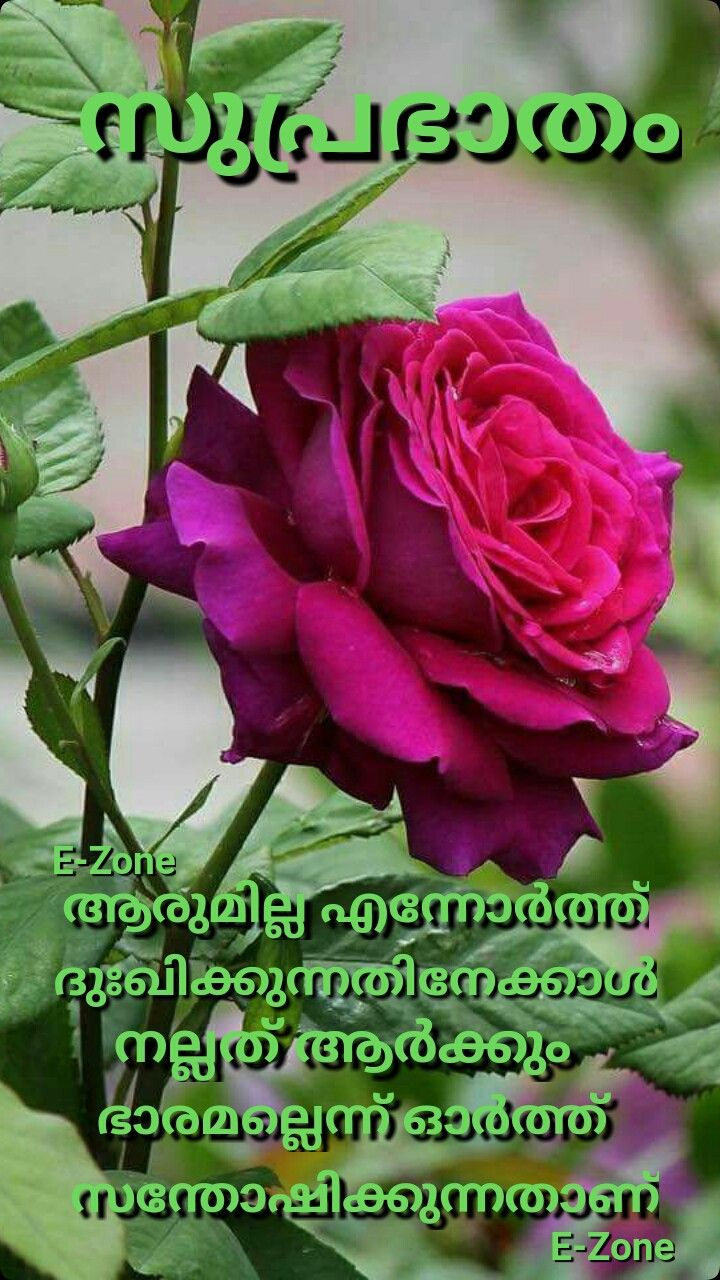 Pin By Eron On Good Morning Malayalam Love You Images Good Morning Morning Wish