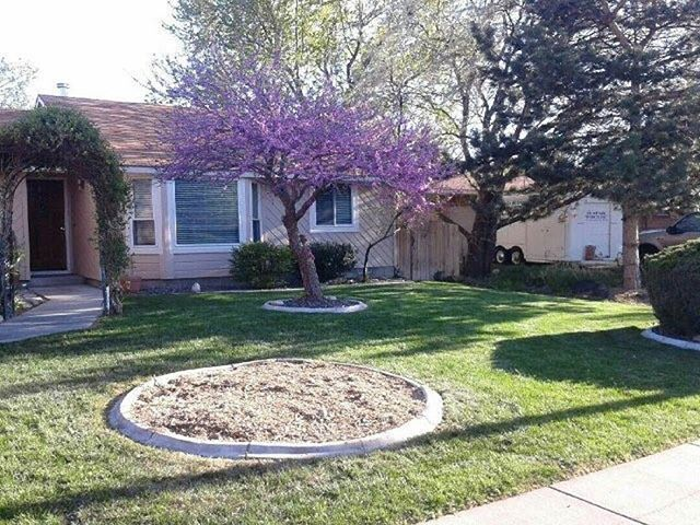 Some Of The Best Reasons To Choose Our Company Include Our Professional Qualityservice Reliable And More What S Tree Service Trees And Shrubs Tree Removal