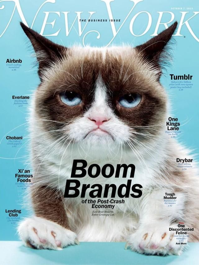 Take a personal #packaging lesson from #GrumpyCat you too can become a #socialmedia phenom PD