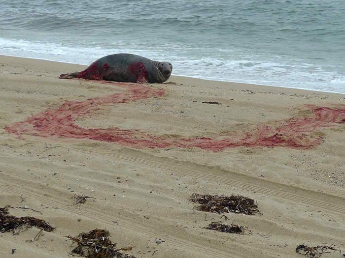 sea lion attack photo